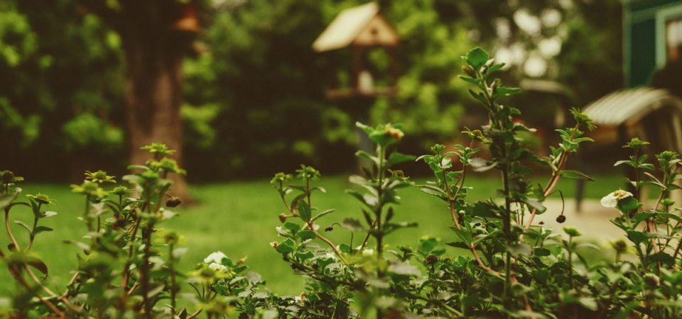 Ein schönerer Garten muss kein Luxus sein