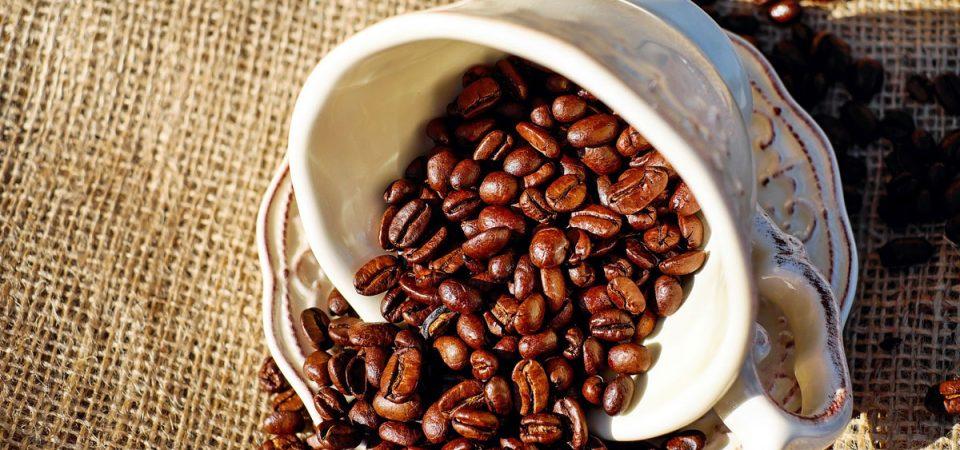 Fair Trade Kaffee: Luxus mit Verantwortungsbewusstsein